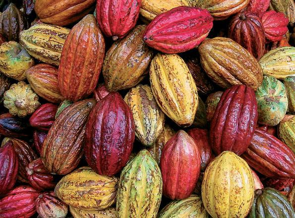 https://tejaschocolate.files.wordpress.com/2011/12/cacaopodsperu.jpg